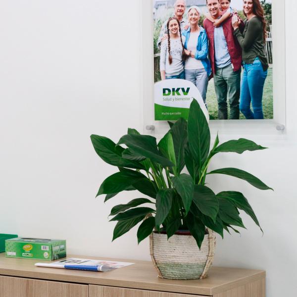 Accede a la mejor sanidad privada con los seguros médicos privados de DKV Elche